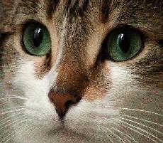 chestnutcat的个人空间